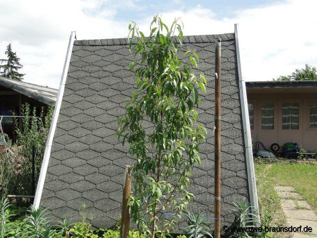 Gartentagebuch 2011 - Pfirsichbaum im garten ...